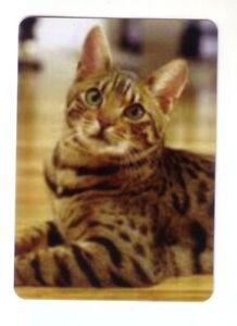 Beautiful Bengal Kitten  - Modern Wide Linen Swap Playing Card