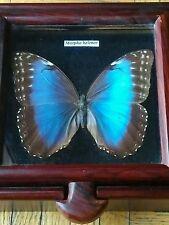 SPECTACULAR MORPHO HELENOR BUTTERFLY SHADOW BOX KEEPSAKE BOX, OOAK