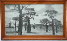 Vintage QLD Rail Train Carriage Photograph in Original Frame Bottle trees Bell