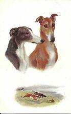 CPA illustrateur Drummond - Sporting Dogs, Greyhounds (Chiens de Chasse) Oilette