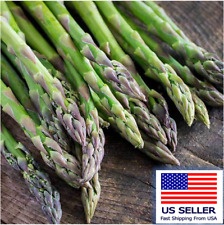 100 ASPARAGUS Seeds- MARY WASHINGTON-Non GMO-Organic.