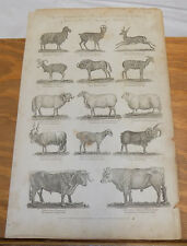 1795 Antique Print/Mammals/Sheep, Goat, Bull, Antelope, Gnu/14 Illustrations