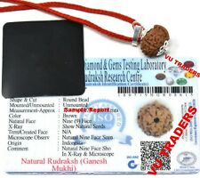 Ganesh Rudraksha / Ganesha Rudraksh Java Bead Lab Certified Size : 14 - 16 MM D2