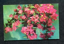 Posted 1964L Bougainvillea Plant/ Flowers
