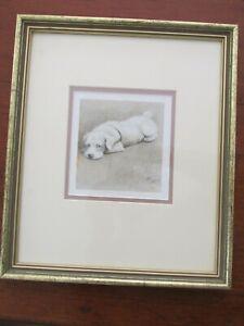 Framed Cecil Aldin Print Dog Sealeyham Terrier Bunch