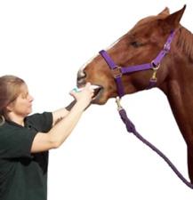 Durvet Apple Flavored Horse Wormer 1.87% Horse Bot Parasites Equine Wormer (x6)