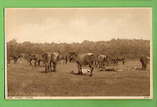 #B.  HORSE  POSTCARD -  NEW  FOREST  PONIES