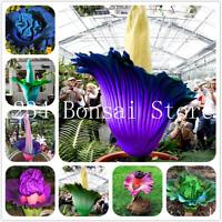 100 Pcs Seeds Corpse Bonsai Flowers Garden Perennial Potted Plants Aerobic NEW