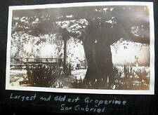 USA 2 REAL PHOTOS SAN GABRIEL CA LARGEST & OLDEST GRAPEVIINE/ CALIFORNIA BEACH
