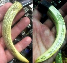 LP Sawai Pig Tooth Yantra Holy Amulet Pendant Wild Boar Luck Power Talismans