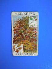 ORIGINAL CIGARETTE CARD: Gallaher Woodland Trees 1912 - The Beech Tree 31