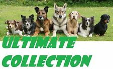 DOG CAT PETS TRAINING package collection ebooks video tutorials resell rights