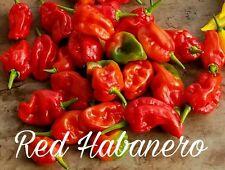(25+) Red Habanero Pepper Seeds