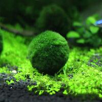 Giant Marimo Moss Ball Cladophora Live Aquarium Plant Fish Aquarium Decor 3- 4cm