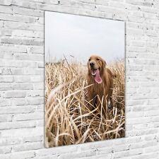 Wand-Bild Kunstdruck aus Acryl-Glas Hochformat 70x100 Hund Golden retriever