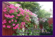 *NEW* Petunia Tidal Wave Seeds STUNNING 6ft-7ft GROWTH - Same Day Post SEEDS UK*