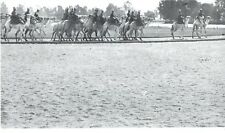 1964 Original Photo Egyptian Army Camel Soldiers training along camp near Cairo