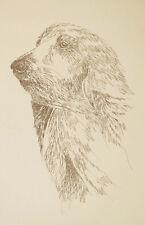 Afghan Hound Art Print Signed Kline Dog Lithograph #23