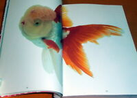 Kingyo - The Graphics of Japanese Goldfish book,japan,aquarium,fish #0389
