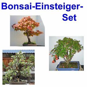 Baum Bonsai SET: EFEU - AMBER - GRANATAPFEL BAUM winterhart Garten
