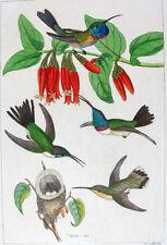 1857,REICHENBACH HUMMINGBIRDS FINE HAND COLOR ENGR. FOLIO U2E