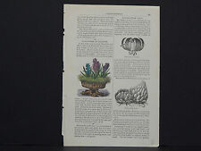 James Vick Seed Catalog Rocheter, N.Y. Flowers/ Vegetables, Hand Colored s#02