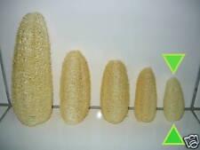 Luffa Luffagurke Pad Schwamm natürlich pflanzlich Peeling ca. 4-6 cm