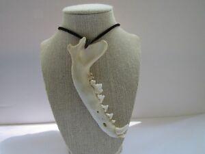 Coyote Jaw Bone Pendant Buckskin Leather Necklace Statement Jewelry N251