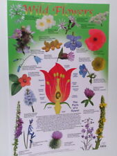 WILD FLOWERS NEW EDUCATIONAL SCHOOL TYPE POSTER CM045