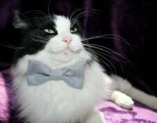 Corbata de moño para gatos
