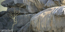 Robert BATEMAN Kopje Lookout LTD art Giclee Canvas COA Leopard