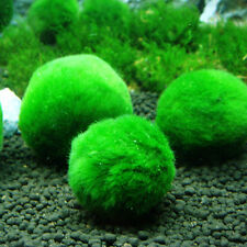 NEW Marimo Moss Balls Live Aquarium Plant Algae Fish Shrimp Tank Ornament 3-4cm