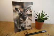 Wallaby Australian Greeting Card, Blank Inside