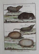 Old PRINT QUADRUPEDES c1790 LE MOLE taupe BUFFON Histoire naturelle gravure