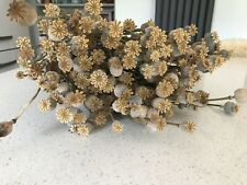 Dried Poppy Heads - Stems Approx 50cm Long