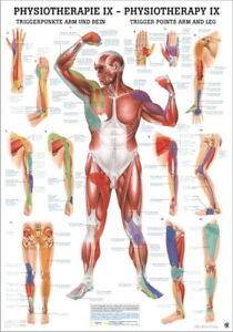 Triggerpunkte Arm Und Bein (Poster 24Cm X 34Cm) von Rüdiger Anatomie