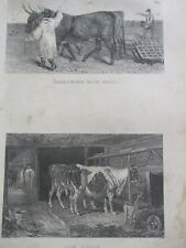 ANTIQUE PRINT C1800'S HARROWING WITH OXEN & COW HOUSE ENGRAVING FARMING ETCHING