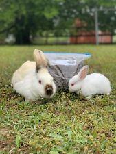 3lbs Pounds California Rabbit Poop Pellet Manure Organic Garden Fertilizer