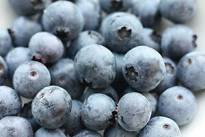 * SOUTHERN BLUEBERRY SEEDS * EVERGREEN SHRUB * HIGH TOLERANCE TO HEAT *