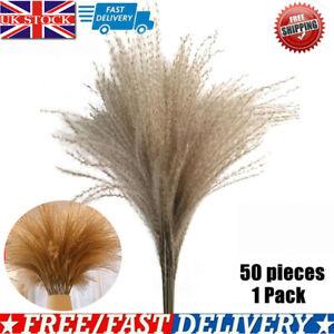 50x Dried Pampas Grass Natural Phragmites Communis Wedding Flower Bunch U K