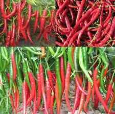 500 HOT CHILLI LONG SLIM RED CAYENNE PEPPER ORGANIC Seeds GARDEN Vegetables