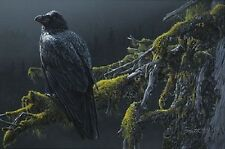 Daniel Smith MOUNTAIN SENTINEL, Raven, giclee canvas #77/150