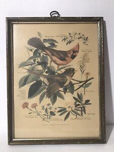 VTG Arthur Singer Bird Prints # 1, 3 & 8 of His Series