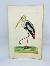 Gangetic Ibis - 1783 RARE SHAW & NODDER Hand Colored Copper Engraving