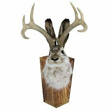 Large Animal Taxidermy for sale | eBay