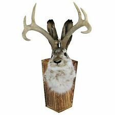 Large Animal Taxidermy Life-Size Mount for sale | eBay