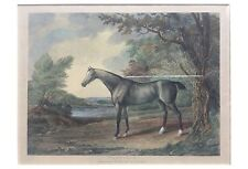 19th-Century Aquatint Etching of Penelope Race Horse Property of Duke of Grafton