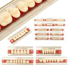 Résine Acrylique Prothèse Dent VITA Color Supérieurs Inférieur Ombre Dentaire