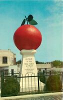 Beautiful Northeast Cornelia Big Red Apple Georgia 1950s Postcard 7834