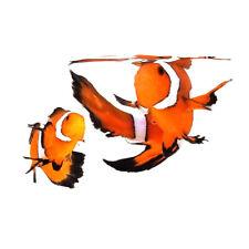 Sustainable Aquatics Fancy Longfin Designer Clownfish Bonded Pair WYSIWYG
